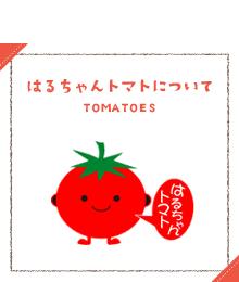 はるちゃんトマトについて